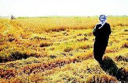 الاحتلال الفارسي يصادر مساحات واسعة 3_63-thumb2.jpg